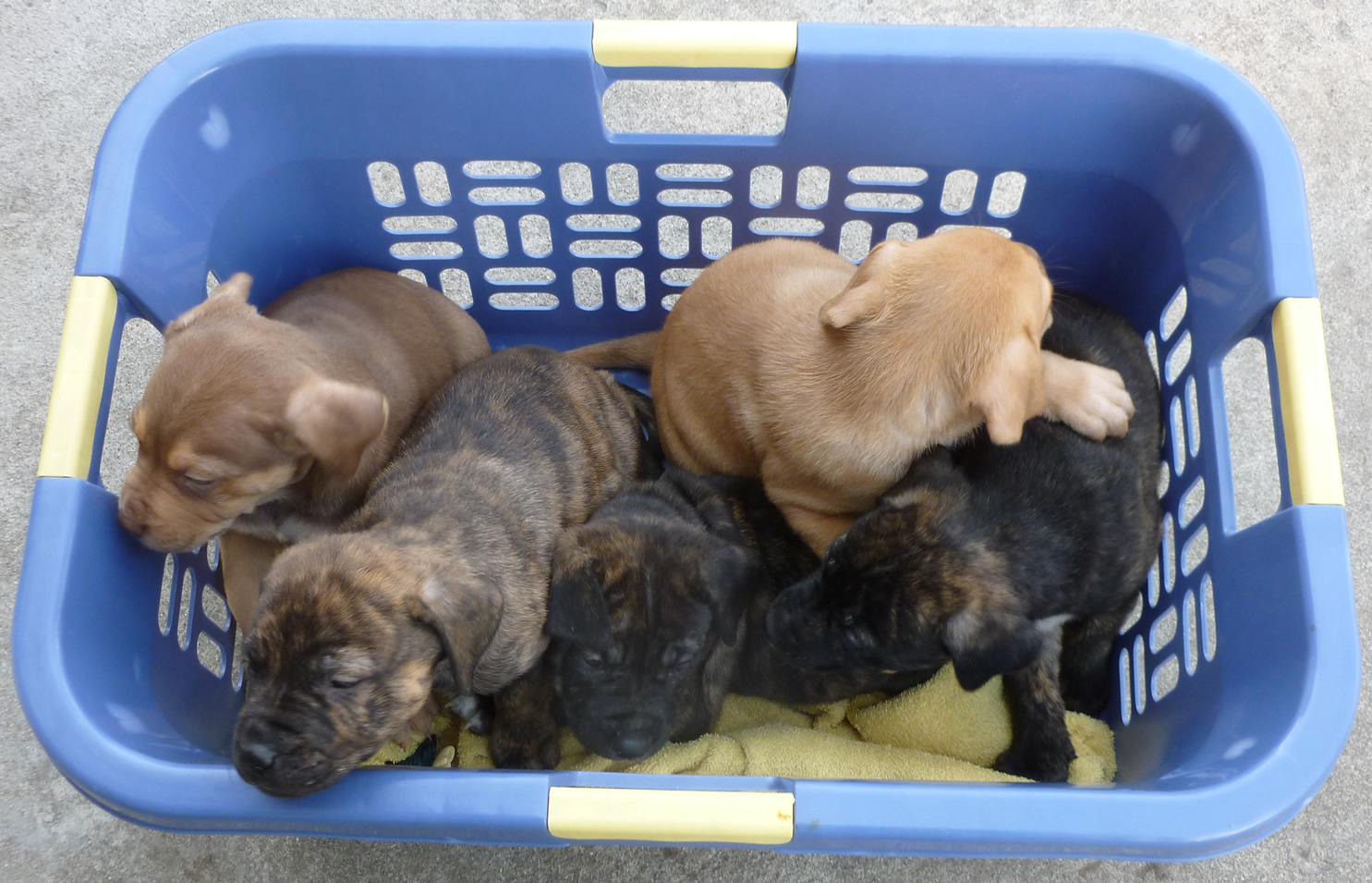 basketpups